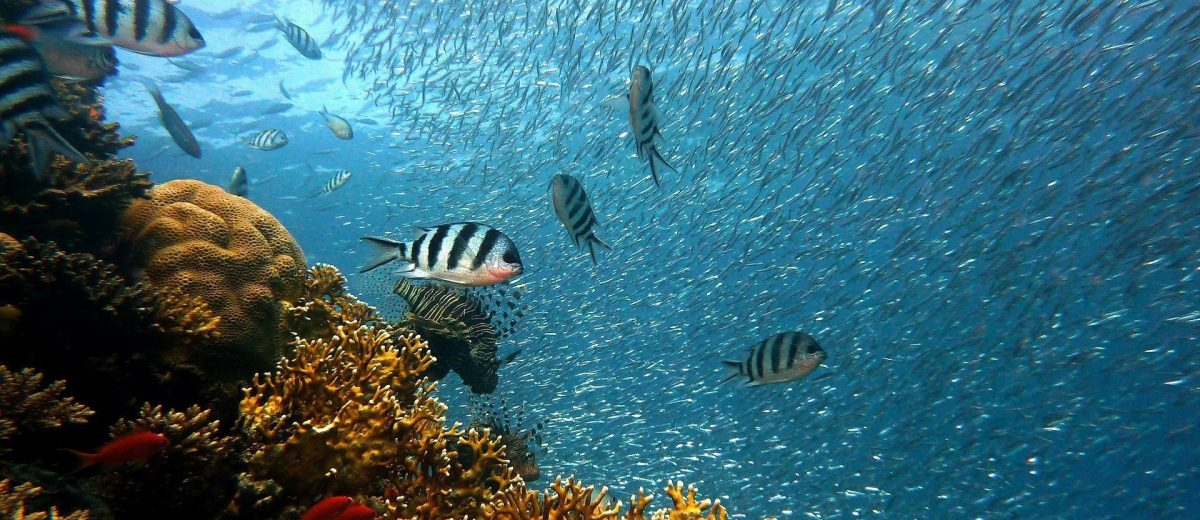 the best snorkel spots in the world the salt sirens