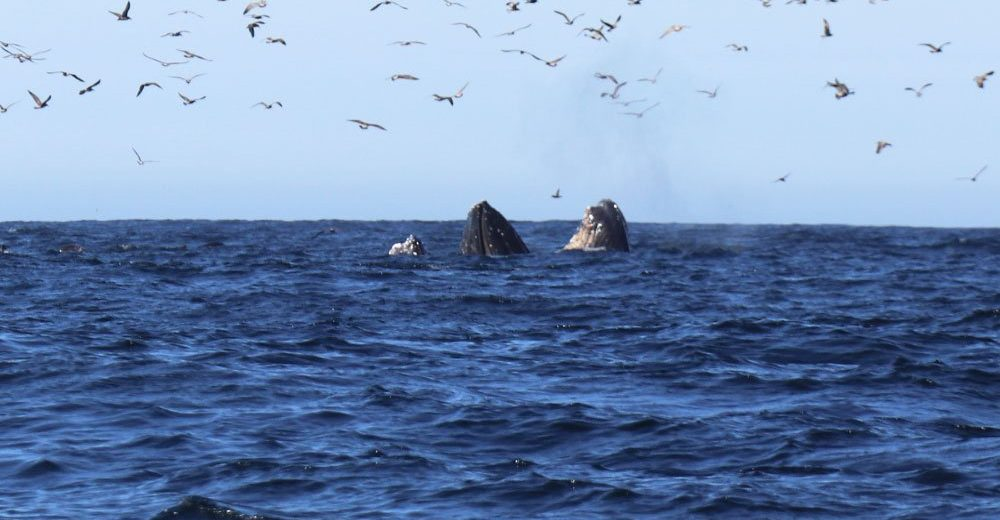 eco friendly whale watching and shark spotting on the farallon