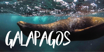 The best liveaboards in Galapagos